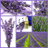 Lavender collage. With ripe branches and oil royalty free stock photos