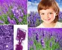 Lavender collection Stock Photos