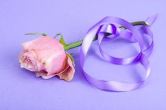 Lavender color ribbon, symbolizing awareness for all cancers, february 4th, world cancer day. Studio Photo royalty free stock photos