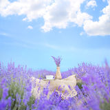 Lavender composition on field. Royalty Free Stock Photo