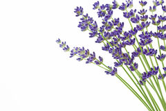 Lavender with copy space Royalty Free Stock Photography