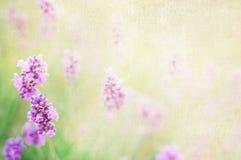 Lavender cotton. Lavender textile image over canvas  fabric Stock Photos