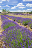 Lavender country Royalty Free Stock Photos