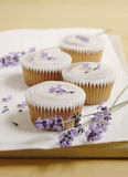 Lavender cup cakes Stock Images
