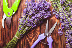 Lavender cutting Stock Images