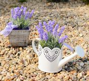 Lavender decoration Royalty Free Stock Images