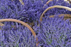 Lavender. In decorative wicker basket Royalty Free Stock Images