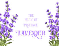 The lavender elegant card. With frame of flowers and text. Lavender garland for your text presentation. Label of soap package. Label with lavender flowers Royalty Free Stock Images