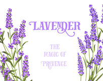 The lavender elegant card. The lavender elegant card with frame of flowers and text. Lavender garland for your text presentation. Label of soap package. Label Royalty Free Stock Images