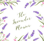 The lavender elegant card. Royalty Free Stock Photo