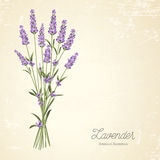 Lavender elegant card Stock Images