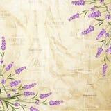 The lavender elegant card. Royalty Free Stock Photos