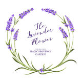 The lavender elegant frame. Royalty Free Stock Photography