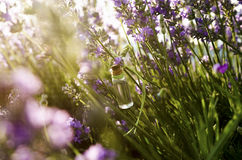Lavender essential oil in the field. During the summer royalty free stock images