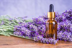 Lavender essential oil. Lavender essential oil natural face and body beauty care treatment remedies royalty free stock images