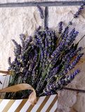 Beautiful blue flower of lavender. royalty free stock images