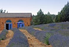 Lavender Farm Stock Photos