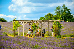 Lavender farm, North Surrey Hills, UK. July 19 Royalty Free Stock Photography