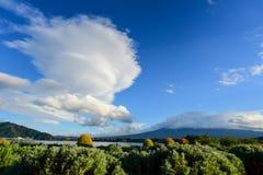 Lavender farm in Oishi Park, Lake Kawaguchiko Royalty Free Stock Photo