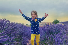 Lavender farmland Stock Images