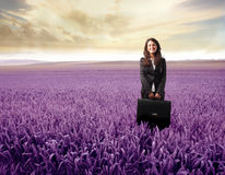 Free Lavender Field Royalty Free Stock Images - 13351329