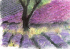 Lavender field. Royalty Free Stock Photography