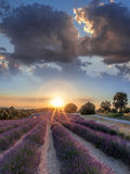 Lavender field against colorful sunset in Provence, France Stock Photos