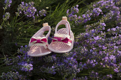 Lavender field and baby shoes. Lavender field and pink baby shoes Royalty Free Stock Photos