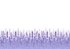 Lavender field background. Watercolour hand drawn flowers, leaves, plants. Lavender field pattern on purple background. Watercolour hand drawn flowers, leaves royalty free illustration