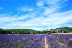 Lavender field at Banon, France Royalty Free Stock Photography