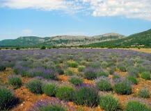 Lavender field in Bosnia and Herzegovina. Stock Photo