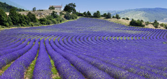 Lavender field and chapel (Provence,France) Royalty Free Stock Photography