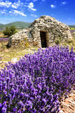 Lavender field. Royalty Free Stock Photos