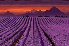 Lavender field at the dusk. Lines of flower bushes. Vector illustration stock illustration