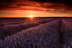 Free Lavender Field Flowers At Sunset In Summer Time Stock Images - 133097294