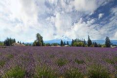 Lavender Field in Hood River Oregon. Lavender field flowers in full bloom at Hood River Valley Oregon during summer stock image