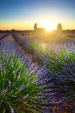 Lavender field and hut at sunset, Provence, France Stock Images