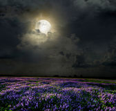 Lavender field in the moonlight Royalty Free Stock Photography