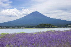 Lavender field and Mt.Fuji Stock Photos