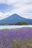 Lavender field and Mt.Fuji Stock Images