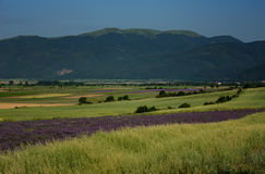 Lavender field, near Kazanlak, Bulgaria. Lavender field at the end of June, near Kazanlak, Bulgaria Royalty Free Stock Photo