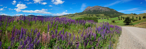Lavender field next to unpaved road, Coyhaique, Chile royalty free stock images