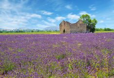 Lavender field with old house Royalty Free Stock Photo