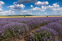 Lavender field. The photo shows lavender field, shot near the village of Madara, Bulgaria Royalty Free Stock Images