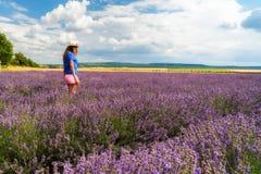 Lavender field, Plateau de Valensole Royalty Free Stock Photography