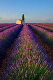 Lavender field in plateau Valensole Royalty Free Stock Image