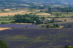 Lavender field Provence Stock Photography