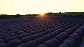 Lavender field in Provence and beautiful sunset over the farmland.  stock footage