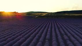 Lavender field in Provence and beautiful sunset over the farmland.  stock video