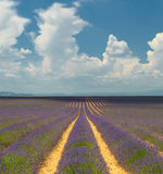 Lavender field, Provence, France Royalty Free Stock Photo